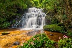 La cascata di Mun-Dang con il fiore di antirrino Immagini Stock