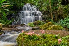 La cascata di Mun-Dang con il fiore di antirrino che fioriscono soltanto sopra Immagini Stock