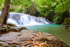 La cascata in foresta tropicale con l'albero pianta la priorità alta Immagini Stock