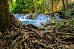 La cascata funziona sulle rocce nelle radici dell'albero della giungla nella priorità alta Fotografia Stock