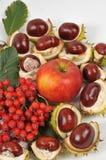 La castaña, una manzana y las hojas, caída está viniendo Imagen de archivo libre de regalías