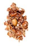 La castaña dulce del veiw superior y la castaña raspan en el fondo blanco Foto de archivo libre de regalías