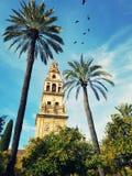 La catedral española en Córdoba rodeó con las palmeras Imágenes de archivo libres de regalías