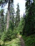 La catena montuosa del Marmaros dei Carpathians ucraini vicino alla città di Rakhiv della regione Transcarpathian l'ucraina 08 Fotografie Stock Libere da Diritti
