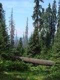 La catena montuosa del Marmaros dei Carpathians ucraini vicino alla città di Rakhiv della regione Transcarpathian l'ucraina 08 Fotografia Stock Libera da Diritti