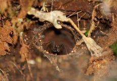 La caverna del ragno Immagine Stock Libera da Diritti