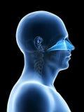 La cavità nasale Immagini Stock
