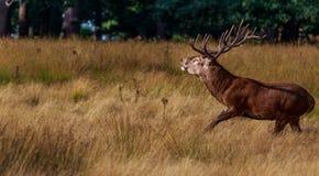 La caza Fotos de archivo