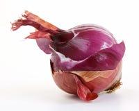 La cebolla roja acoda (el allium) Imagen de archivo