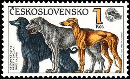 LA CECOSLOVACCHIA - CIRCA 1990: timbri, stampato in Cecoslovacchia, manifestazioni un levriero afgano, il wolfhound irlandese, il royalty illustrazione gratis
