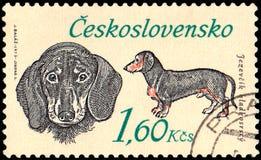 LA CECOSLOVACCHIA - CIRCA 1973: un bollo, stampato in Cecoslovacchia, mostra un bassotto tedesco Fotografie Stock