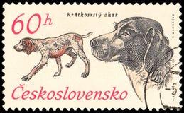 LA CECOSLOVACCHIA - CIRCA 1973: un bollo, stampato in Cecoslovacchia, mostra un cane da lepre dai capelli corti tedesco Fotografie Stock