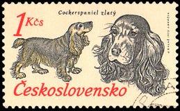 LA CECOSLOVACCHIA - CIRCA 1973: un bollo, stampato in Cecoslovacchia, mostra cocker spaniel dorato Fotografie Stock Libere da Diritti