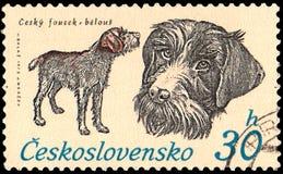 LA CECOSLOVACCHIA - CIRCA 1973: un bollo, stampato in Cecoslovacchia, mostra un fousek ceco Immagine Stock Libera da Diritti