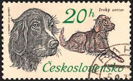 LA CECOSLOVACCHIA - CIRCA 1973: un bollo stampato in Cecoslovacchia mostra un setter Irlandese Fotografia Stock Libera da Diritti