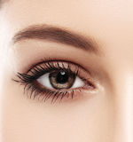 La ceja de la mujer del ojo observa latigazos foto de archivo