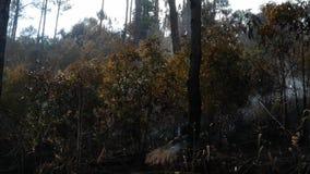 La cenere ha coperto la foresta dopo fuoco Fumo che aumenta dalla terra dopo l'incendio forestale, foschia nell'atmosfera Incendi stock footage