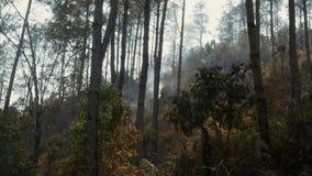 La cenere ha coperto la foresta dopo fuoco Fumo che aumenta dalla terra dopo l'incendio forestale, foschia nell'atmosfera Incendi archivi video