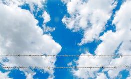 La cerca del alambre de púas delante del cielo azul tiene nube blanca Foto de archivo libre de regalías