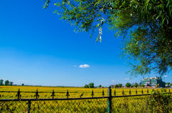 La cerca del hierro alrededor del campo de arroz Imagenes de archivo