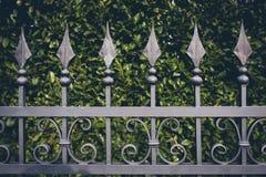 La cerca del hierro con verde sale del fondo Foto de archivo libre de regalías