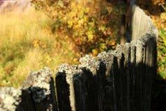 La cerca del vintage cubierta con el hawkmoth Imagen de archivo libre de regalías
