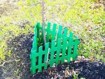 La cerca verde incluye y protege un ?rbol joven, ?rbol joven imagen de archivo libre de regalías
