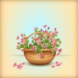 La cereza de la cesta de mimbre de la primavera florece la tarjeta de felicitación Foto de archivo