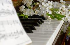 La cereza floreciente en un piano Fotografía de archivo libre de regalías
