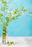 La cereza ramifica con las hojas y las flores jovenes frescas en un florero de cristal Fondo gris Copie el espacio Fotos de archivo libres de regalías