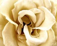 La cerimonia nuziale bianca è aumentato Fotografie Stock Libere da Diritti