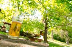 La cerveza de consumición en naturaleza puede levantarle para arriba Fotografía de archivo libre de regalías