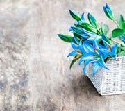 La cesta blanca con el lirio azul florece el ramo en TA de madera rústica Fotografía de archivo