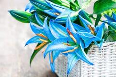 La cesta blanca con el lirio azul florece el ramo en TA de madera rústica Fotos de archivo