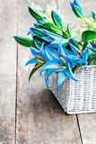 La cesta blanca con el lirio azul florece el ramo en TA de madera rústica Fotos de archivo libres de regalías