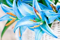 La cesta blanca con el lirio azul florece el ramo en TA de madera rústica Imagen de archivo libre de regalías