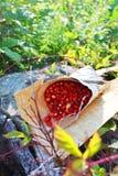 La cesta con las fresas Imagen de archivo libre de regalías