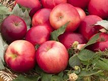 La cesta con las manzanas rojas Imagenes de archivo