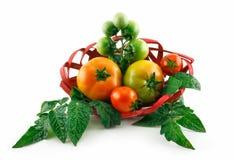 La cesta con los tomates maduros (aún vida) aisló Fotos de archivo