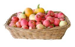 La cesta con manzanas y una calabaza Imagenes de archivo