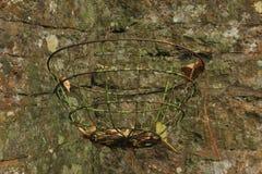 La cesta de Cotswold Fotos de archivo libres de regalías