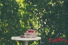 La cesta de manzana orgánica fresca se está colocando por completo en una tabla en jardín Fotografía de archivo libre de regalías