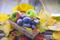 La cesta de mimbre con las pasas y las manzanas maduras se coloca en una tabla de madera vieja en el fondo de un ventana-travesañ Imagenes de archivo