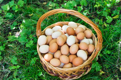 La cesta de mimbre con los huevos está en hierba imagen de archivo