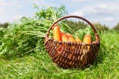 La cesta de mimbre de madera con las zanahorias frescas con verde se va en foto de archivo libre de regalías