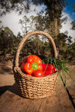 La cesta de verduras frescas sazona el tomate de la cebolla con pimienta en la tabla de madera rústica Imagen de archivo libre de regalías