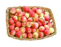La cesta grande con las manzanas Foto de archivo libre de regalías
