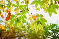 La châtaigne colorée part un beau jour d'automne photographie stock