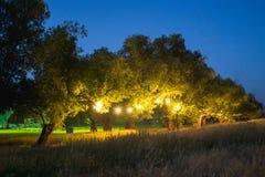 La chaîne de la vie lumineuse Photos libres de droits