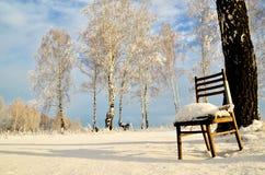 La chaise se tient au beau milieu du bouleau d'hiver Photos stock